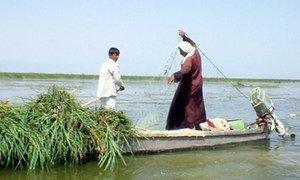 Fishing in the Iraqi Marshlands. IRIN
