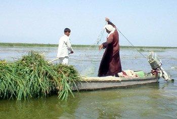 Des pêcheurs dans les marais iraquiens.