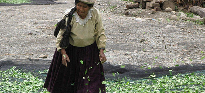 Campesina en Bolivia. Foto: UNODC