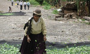 Drying coca leaves in Bolivia.