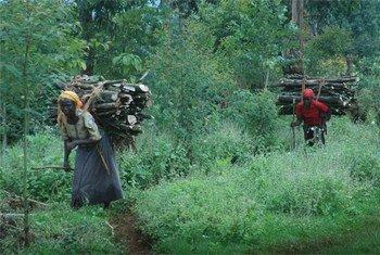 Des millions de gens dépendent des forêts.