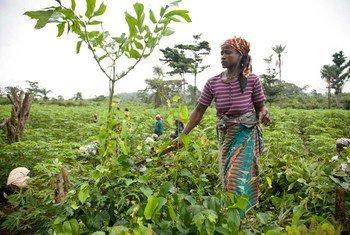A woman farmer in Ganta, Liberia.