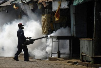 Chemical spraying is the surest way to eliminate the mosquito that carries dengue fever