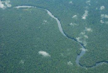 La République démocratique du Congo possède la moitié des forêts et des ressources en eau de l'Afrique.