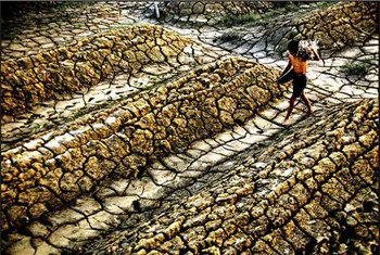 Degraded dryland ecossystems put at risk the social and economic well-being of millions of people.
