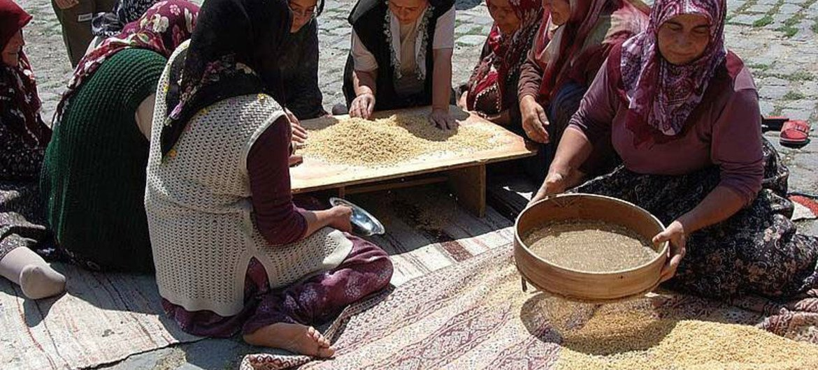 Final cleaning of the wheat for Keskek, a traditional Turkish ceremonial dish prepared for wedding ceremonies, circumcisions and religious holidays