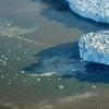 De acordo com o estudo, o uso da terra pelos seres humanos afeta diretamente mais de 70% da superfície terrestre global e livre de gelo.