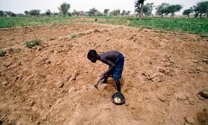 La relation entre changements climatiques, migrations et conflits demeure très complexe dans la région du Sahel. Photo PNUE