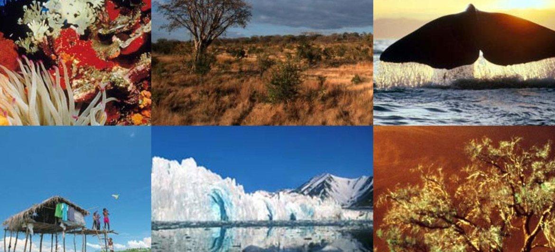 Journée de la biodiversité de l'ONU