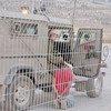 Un soldat israélien arrêtant un enfant palestinien âgé de 12 ans à un point de passage à Naplouse.