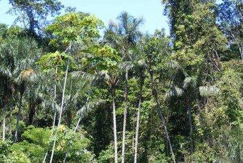 Msitu wa Amazon