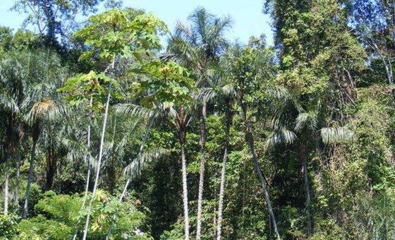 Taxas de desmatamento continuam caindo, a erradicação de espécies exóticas invasoras de ilhas está crescendo e a consciência sobre a biodiversidade parece estar aumentando.