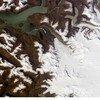 Glaciar Jorge Montt, en el sur patagónico, en Chile.