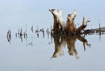 Reflejo de un árbol en el agua en los humedales del lago Tasitolu, en Timor Leste.
