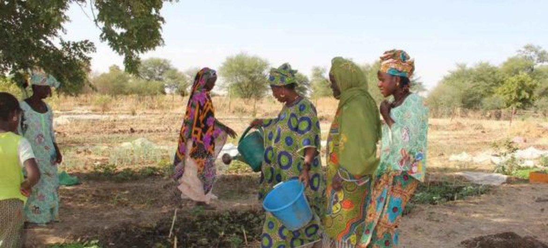 La sécheresse au Sahel rend l'agriculture difficile pour les femmes de Yelimne, au Mali. Photo PAM/Daouda Guirou (photo d'archive)