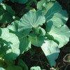 Organic cabbage.