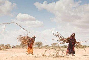 Африке   наблюдается  тенденция  роста  последствий изменения  климата – некоторые  разорены в результате  сильной засухи.   Фото  УВКБ/Б.Беннон