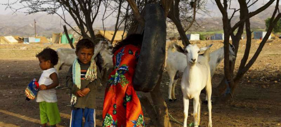 Children and livestock shelter in a northern Yemen camp after being displaced by fighting.