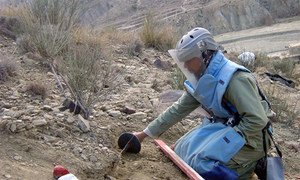 Demining engineer of the Mine Action Programme of Afghanistan clears an anti-personnel landmine. UN Photo/UNMACA