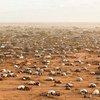 An aerial view of the Dadaab refugee complex in north-east Kenya.