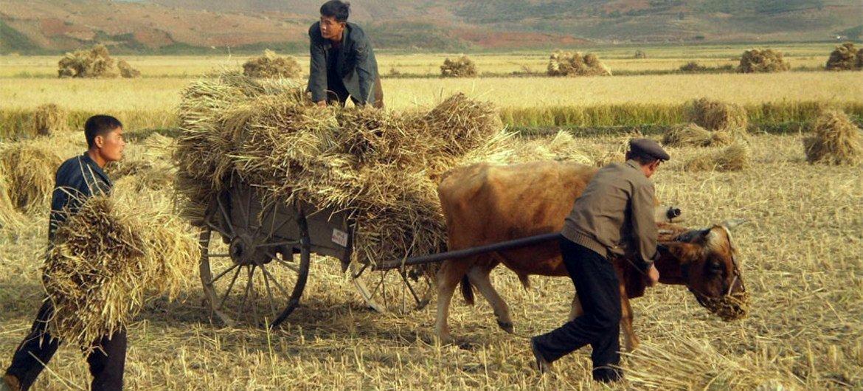 Des agriculteurs en RPDC.