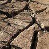 El Niño ha provocado una grave sequía en Honduras y Guatemala. Foto: PMA/Phil Behan