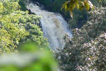 Reserva de la Biosfera de Sheka, Etiopía. Foto: Ministerio Etíope de Ciencia y Tecnología