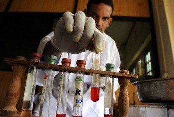 Un técnico de veterinaria de un proyecto de la FAO analiza muestras de sangre de ganado. Foto: FAO/I. Kodikara