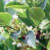 Planta de coca. Foto UNODC