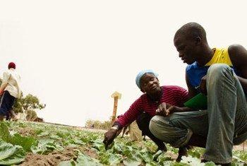 Agriculteurs en Afrique.