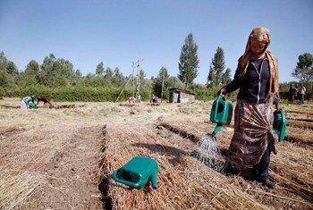 FAO destaca que  fome afeta20% das pessoas em África