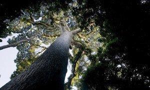 Photo: FAO/Giulio Napolitano