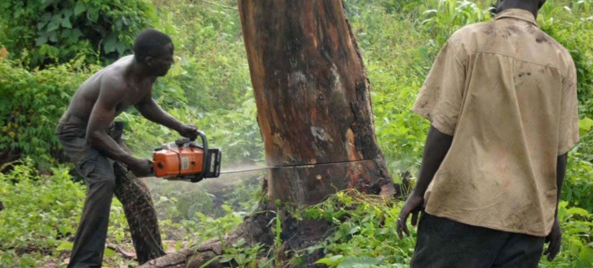 cost of deforestation in kenya far exceeds gains from forestry and
