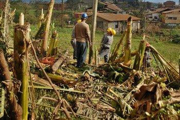 Campesinos en Cuba. Foto de archivo: PNUD/AIN FOTO/Ivan P. Carreras