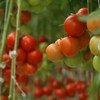 Узбекистан является одной из пяти наиболее зависимых от сельского хозяйства стран в мире
