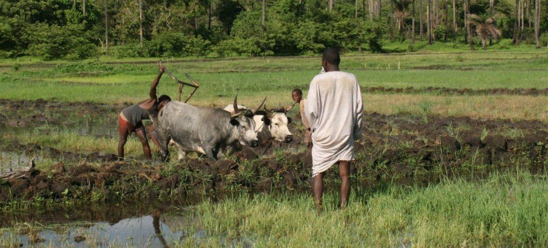 几内亚比绍的农民正在准备耕种。