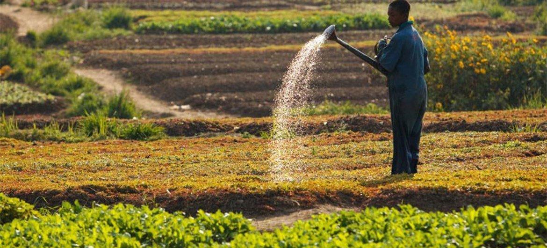 Un agriculteur arrose des champs à Lubumbachi, en République démocratique du Congo (RDC).