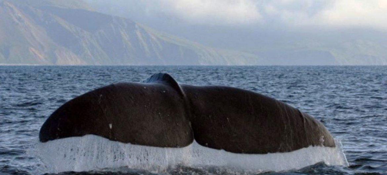 Un nouveau rapport du PNUD affirme que cinq milliards de dollars d(investissements publics pourraient faire la différence s'agissant de la détérioration des océans.