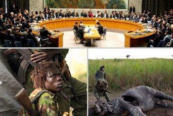 图片来源:《濒危野生动植物种国际贸易公约》