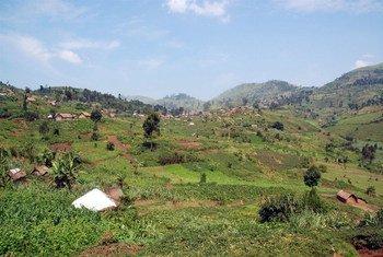 Les collines fertiles du territoire de Masisi, dans la province du Nord-Kivu.