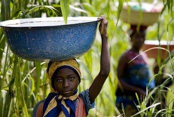 """Une fillette dans l'état de Kaduna, au Nigeria, transporte de l'eau d'une rivière infestée de mouches porteuses du virus de l'onchocercose, la """"cécité des rivières""""."""