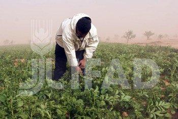 Tijana Fares, une jeune agricultrice, s'occupe de ses champs, près du village de Khawy, en Tunisie. (Archives)