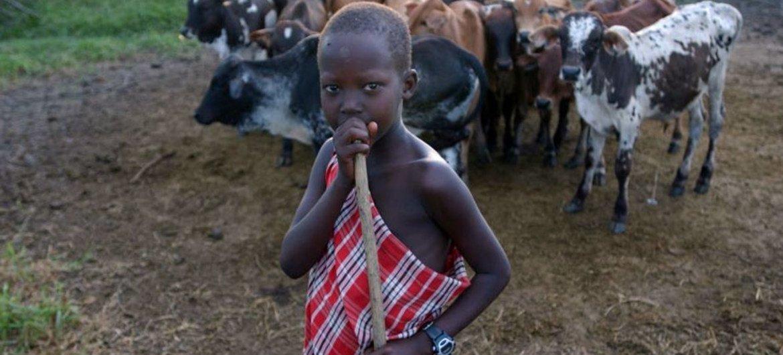 El robo de ganado y el secuestro de niños es frecuente en la zona fronteriza entre Etiopía y Sudán del Sur. Foto: FAO/Giuseppe Bizzarri