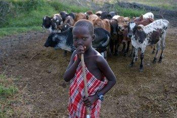 Un jeune homme surveille son bétail.