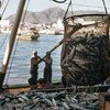 Pesca teve produção global de 179 milhões de toneladas em 2018