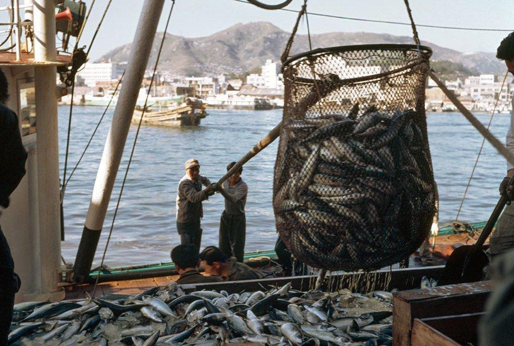 Pescadores descargando en un puerto.