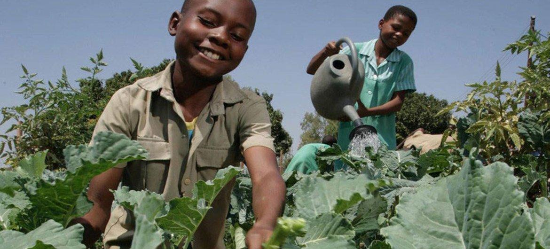 Des enfants du Zimbabwe entretiennent le jardin de leur école.