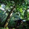 Foto: UN Forum on Forests/Fendi Aspara