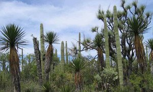 Tehuacán-Cuicatlán has one of Mexico's highest rates of biodiversity and endemic species.