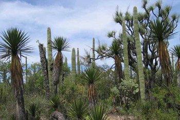 Tehuacán-Cuicatlán a l'un des taux de biodiversité et d'espèces endémiques les plus élevés du Mexique.